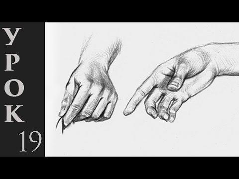 Как нарисовать кисти рук карандашом поэтапно