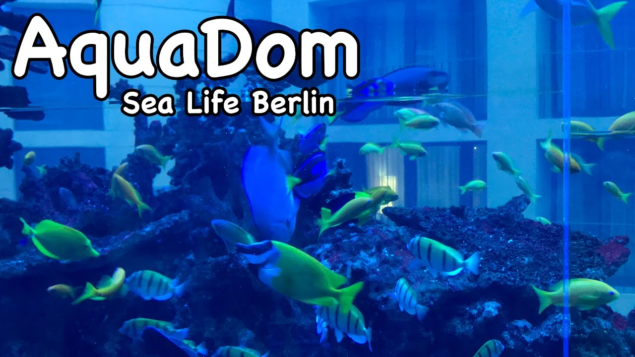 aquadom sea life berlin march 2017 youtube. Black Bedroom Furniture Sets. Home Design Ideas