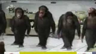 Maymunlar Horon Oynuyor-TrForumuz.Biz