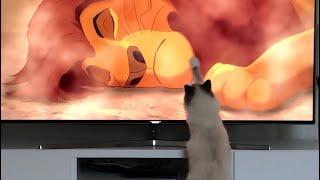 Cat watching mufasa death scene