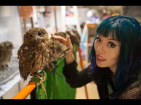 Japan Owl Theme Cafes - Tokyo travel news segment with reporter La Carmina, on Business Insider