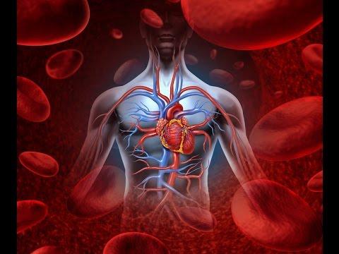 Как разогнать кровь в организме быстро