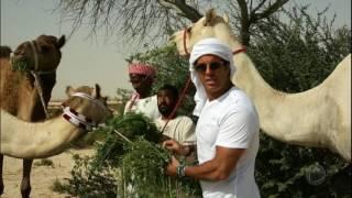 A luxuosa corrida de camelos no Catar