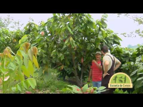 Escuela de Campo - Cultivo y manejo de Cacao - Mayo 22 de 2013