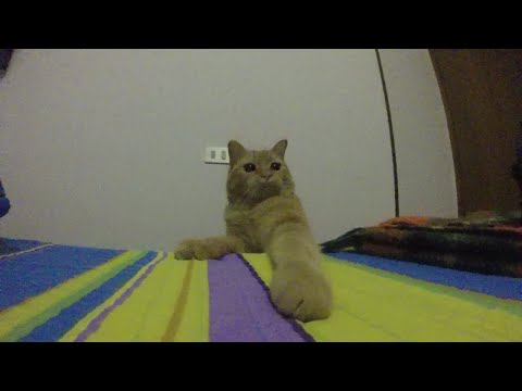 Orange Tabby Cat Attack in Slow Motion with GOPRO HERO – SISSI THE RED CAT