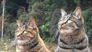 猫ハウスに今季一番の寒波襲来 Cold wave hit the outdoor cat house thumbnail