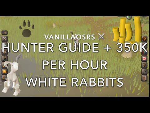 OSRS White Rabbit Hunter Guide 350K Per Hour