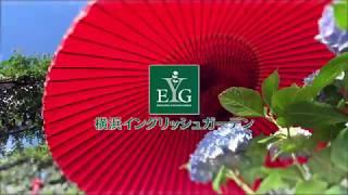 首都圏随一と言われる300品種のアジサイは、山アジサイから華やかな園芸...