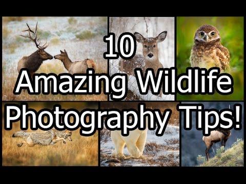 10 Amazing Wildlife Photography Tips