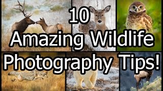 10 amazing wildlife photography tips