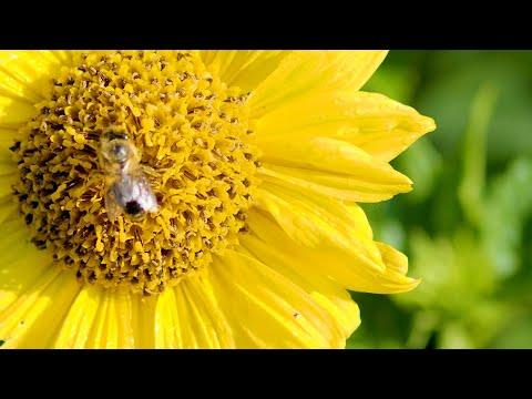 Gelbe Blumen, Lichtblicke für alle