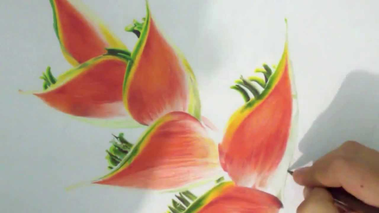 Dibujo Flores A Color Flowers Color Drawing 色鉛筆で描いた花