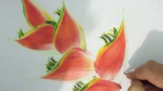 dibujo flores a color - flowers color drawing - 色鉛筆で描いた花