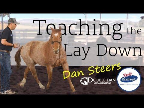 Teaching the Lay Down - Double Dan Horsemanship