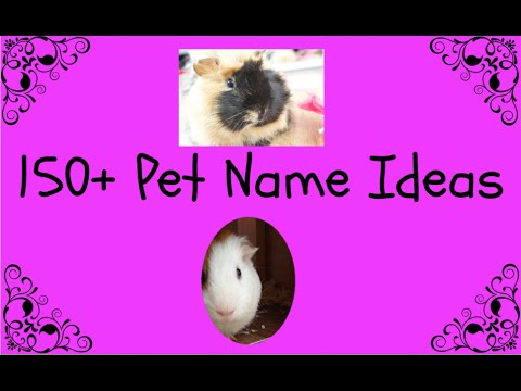 150+ Pet Name Ideas