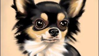 Тайная жизнь домашних животных (фотки)