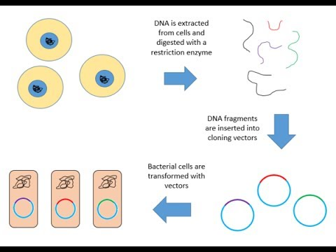 Genomic library