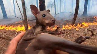 Pożary w Australii. Jak pomóc?