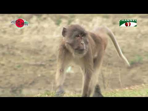 Nature and Life - Episode 279 (Forest Mammals)