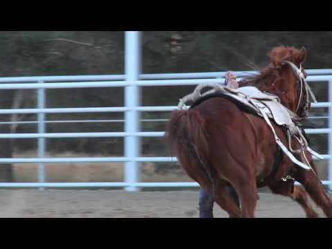 Griffith Trick Riding Stock Show 2012 #3
