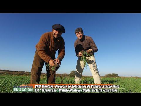 """Máximo Mercier - Productor Agropecuario - Proyecto """"ROTACIONES"""" de CREA Montoya"""