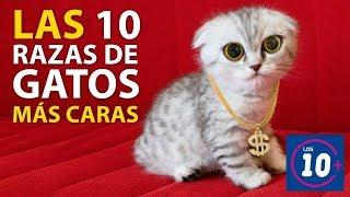 Las 10 razas de gatos mas caras!