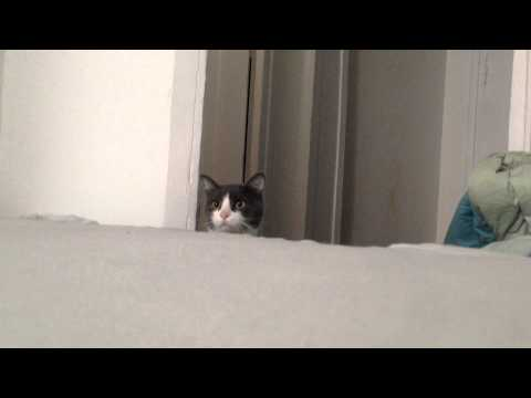 Funny cat video – the Cutest cat PEEK A BOO!