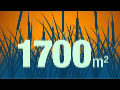 Charbon de Typha - Mauritanie - 100 innovations pour un développement durable pour l'Afrique