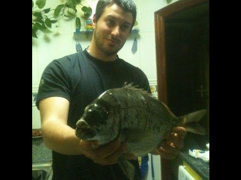 pesca del sargo a corcho ( muxarra, mojarras ) febrero, actividad frenetica, en bizkaia.