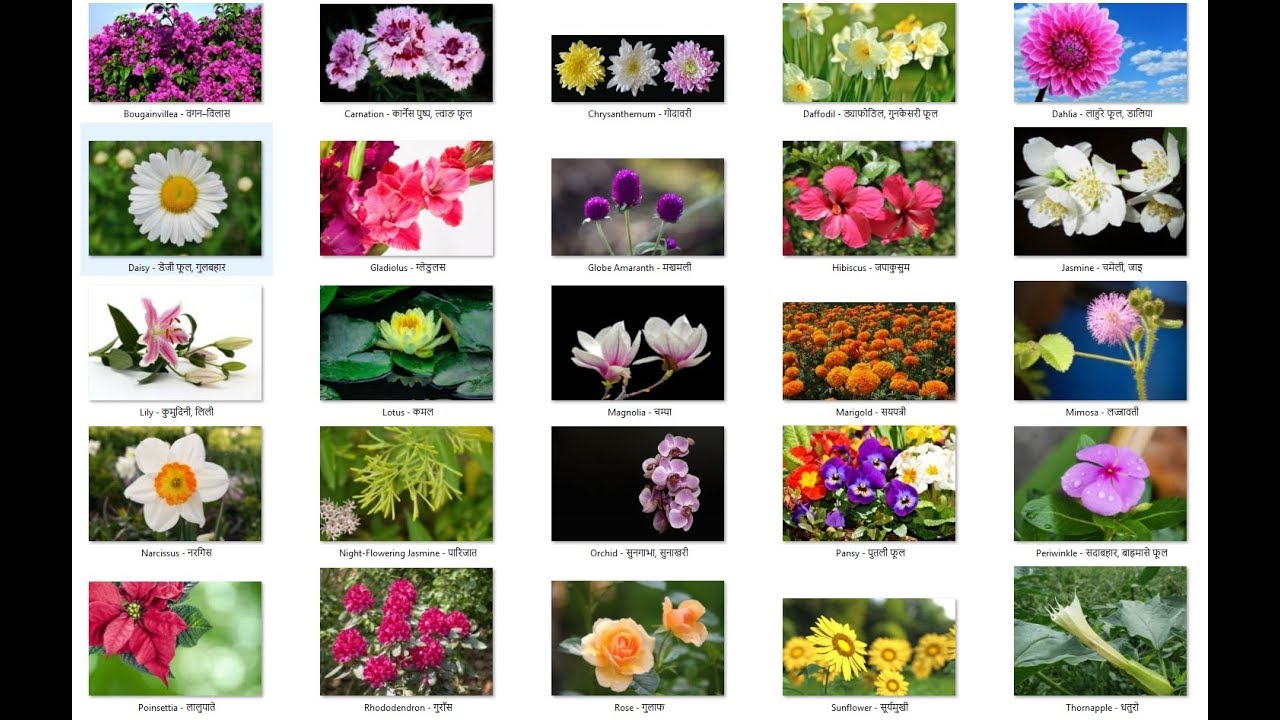 Names of flowers in english and nepali names of flowers in english and nepali izmirmasajfo