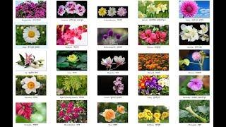 Names  of FLOWERS in English and Nepali - फूलहरुको नाम