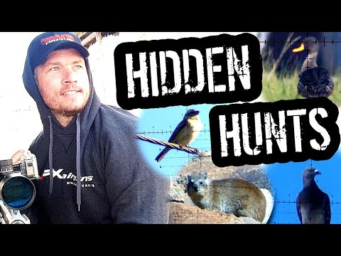 AIRGUN HUNTING I Hidden Hunting Footage Revealed