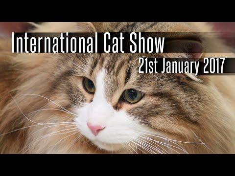 International cat show - 21th January 2017