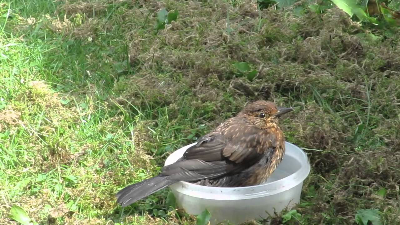 Afbeeldingsresultaat voor vogeltje dat zich wast