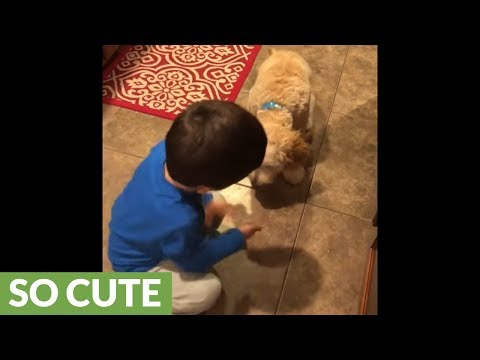 Cute toddler practices dog tricks with his puppy