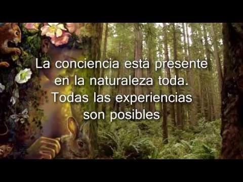 El Alma Sabe - Dra. Viviana Zenteno - Book Trailer