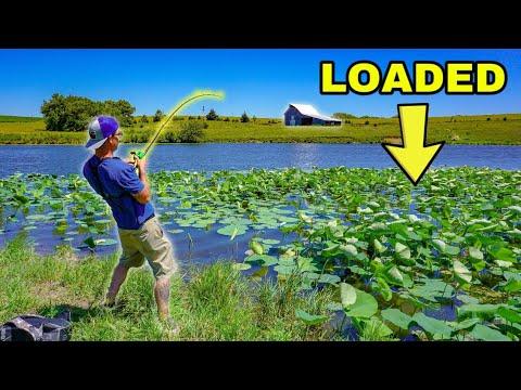 Fishing ROADSIDE Farm Pond For ANGRY Fish!!! (Insane)