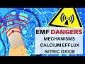 EMF Danger: Basic Cellular Mechanisms, Calcium Efflux & Nitric Oxide