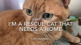 Rescue Cat Needs Your Help
