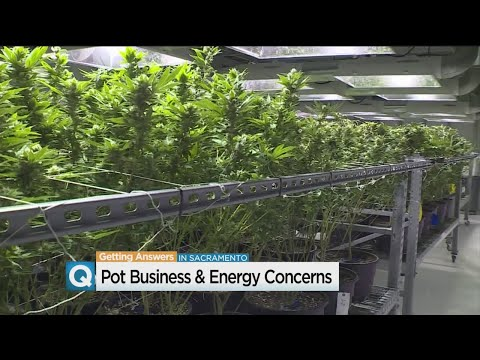 Indoor Marijuana Grows May Increase Power Needs In California