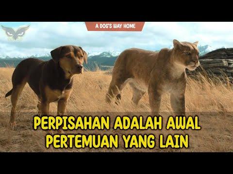PERJUANGAN MENEMUKAN RUMAH SEJATI | Alur Cerita Film A Dog's Way Home review rekomendasi film