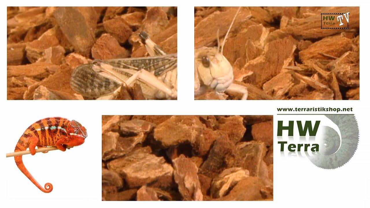 Hw Terra Workshop Zur Haltung Von Heimchen Und Grillen Youtube