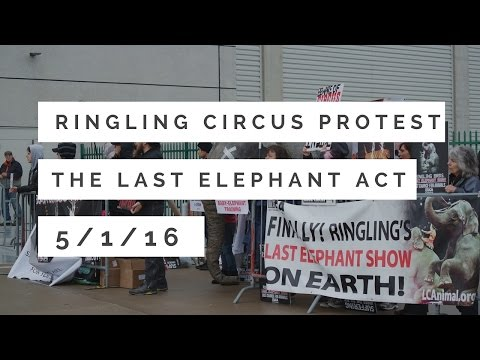 RINGLING CIRCUS PROTEST -THE LAST ELEPHANT ACT- 5/1/16
