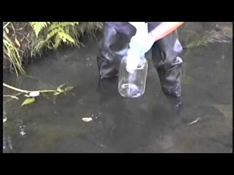 Sediment II - Collection of Stream Sediment Samples.avi