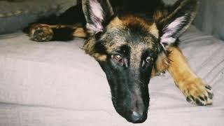 كلبي تعبان اوي يارب يقوم بالسلامه
