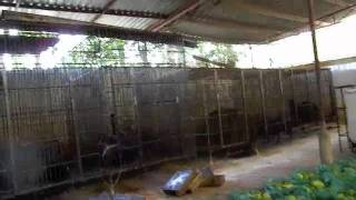 Bear Bile Trade in Vietnam