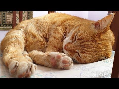 Relaxing Cat Video 58