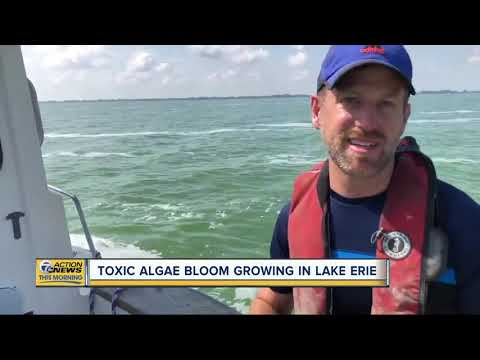 Toxic Algae Bloom Growing In Lake Erie