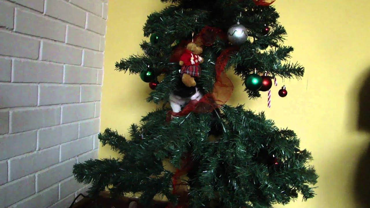 Gatos en rbol de navidad youtube - Arboles de navidenos ...