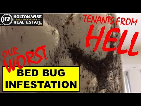 Property Manager Releases Footage of Horrific Bed Bug Infestation - Tenants From Hell 15